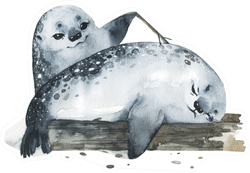Illustration Cute Fur Seals In Watercolor Style Playing Sticker