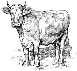 Illustration Of A Cow In The Meadow Sticker