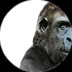 Illustration Of A Gorilla Face Close Up Sticker