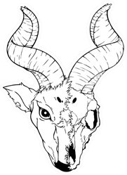 Illustration Of Antelope Skull Sticker