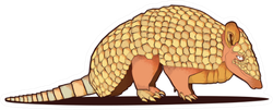 Illustration Of Armadillo Isolated On White Sticker
