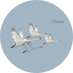 Illustration Of Flying Swans On Blue With Lettering Sticker