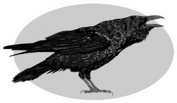 Illustration Of The Black Raven Crow Bird In Oval Sticker