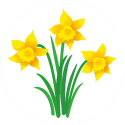 Illustration Of Three Daffodils With Leaves Sticker