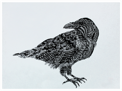 "Illustration  ""the Black Crow"" Sticker"