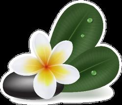 Illustration With Natural Plumeria Flower Sticker