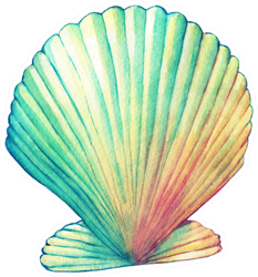 Illustrations Of Sea Shell In Rainbow Paint Sticker