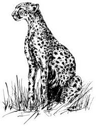 Image Of A Cheetah Sitting In The Grass Sticker