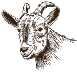 Image Of A Goat's Head In The Style Of Engraving Sticker