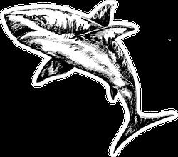 Inked Shark Illustration Sticker