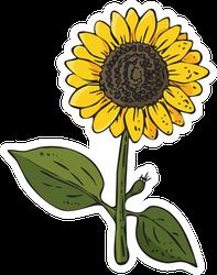 Inked Sunflower Sticker