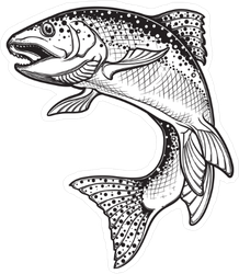 Intricate Rainbow Trout Drawing Sticker