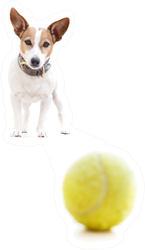 Jack Russell Terrier Dog Playing With Tennis Ball Sticker