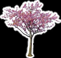 Japanese Cherry Blossom Tree Sticker