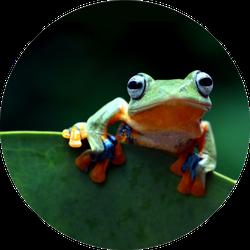 Javan Tree Frog On Leaf Sticker