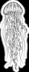 Jellyfish Illustration Sticker
