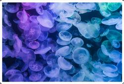 Jellyfishes Rainbow Gradient Sticker