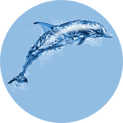 Jumping Water Dolphin Sticker
