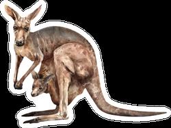 Kangaroo With Baby Realistic Sticker