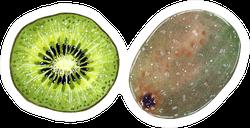 Kiwi Fruit Watercolor Sticker