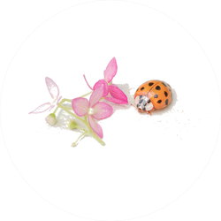 Ladybug Sits On A Flower Sticker