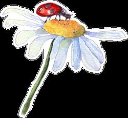 Ladybug Sitting On White Camomile Flower Sticker