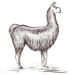 Lama Sketch Illustration Sticker