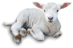 Lamb Laying Down Cute Sticker