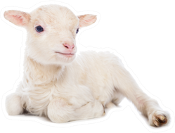 Lamb Sitting In Front Of A White Background Sticker
