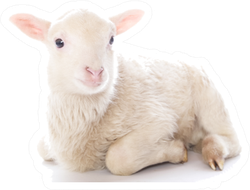 Lamb Sitting In Front Of A White Sticker