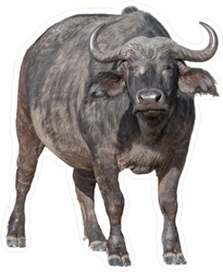 Large African Cape Buffalo Sticker