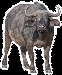 5fdc8b36e Cool Buffalo Car Stickers & Decals – Customizable & Durable