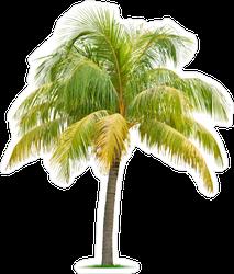 Large Palm Tree Sticker