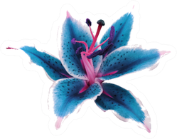 Lily Turquoise-white Flower Sticker