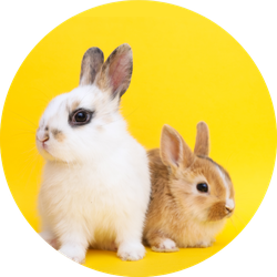 Little Cute Rabbits On The Yellow Background Sticker