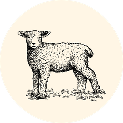 Little Lamb Sketch On Color Sticker