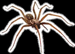 Live Predatory Spider Sticker