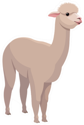 Llama Cartoon Sticker