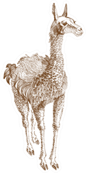 Llama Illustration Sticker