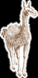 Llama Illustration Sticker