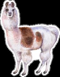 Llama Or Alpaca Hand-drawn Watercolor Illustration Sticker