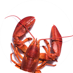 Lobster In Circle Sticker