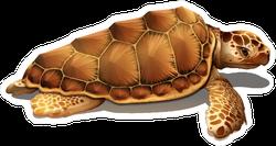 Loggerhead Sea Turtle Sticker