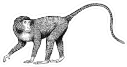 Long Tail Monkey Sticker