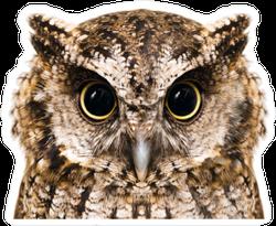 Macro Photography Owl Sticker
