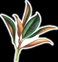 Magnolia Branch Hand Drawn Watercolor Illustration Sticker
