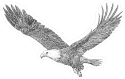 Majestic Eagle Sticker
