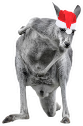 Male Kangaroo In Christmas Hat Sticker