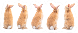 Many Variety Action Of Orange-brown Cute Baby Rabbit Sticker
