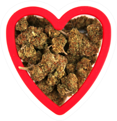 Marijuana Buds In A Heart Shaped Cookie Cutter Sticker